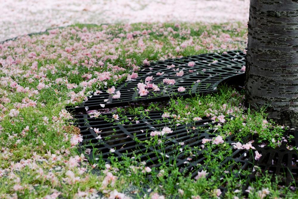 fleur-de-cerisier-01