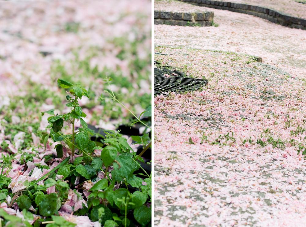 fleur-de-cerisier-09
