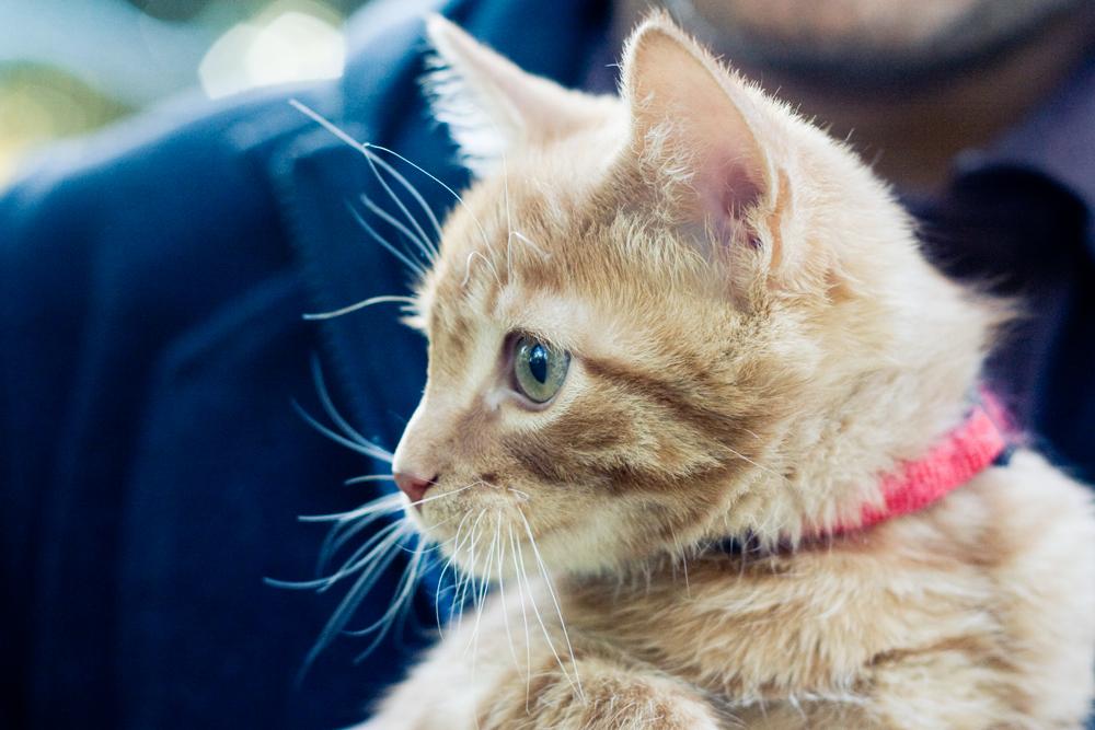 petit-chat-01
