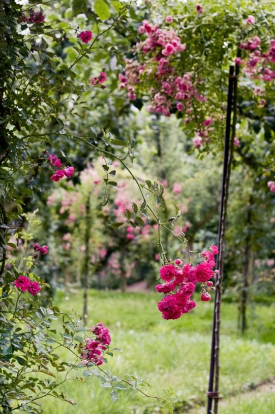 jardin-albert-kahn-roseraie-05
