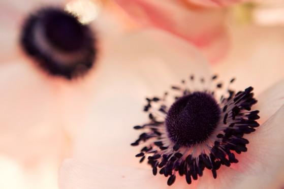 anemone-00