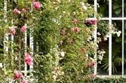 jardin-albert-kahn-roseraie-00-559x372