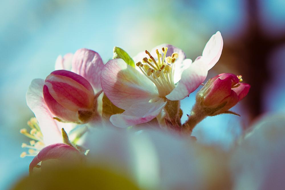 fleurs-001