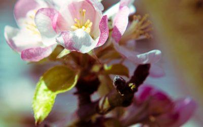 fleurs-004