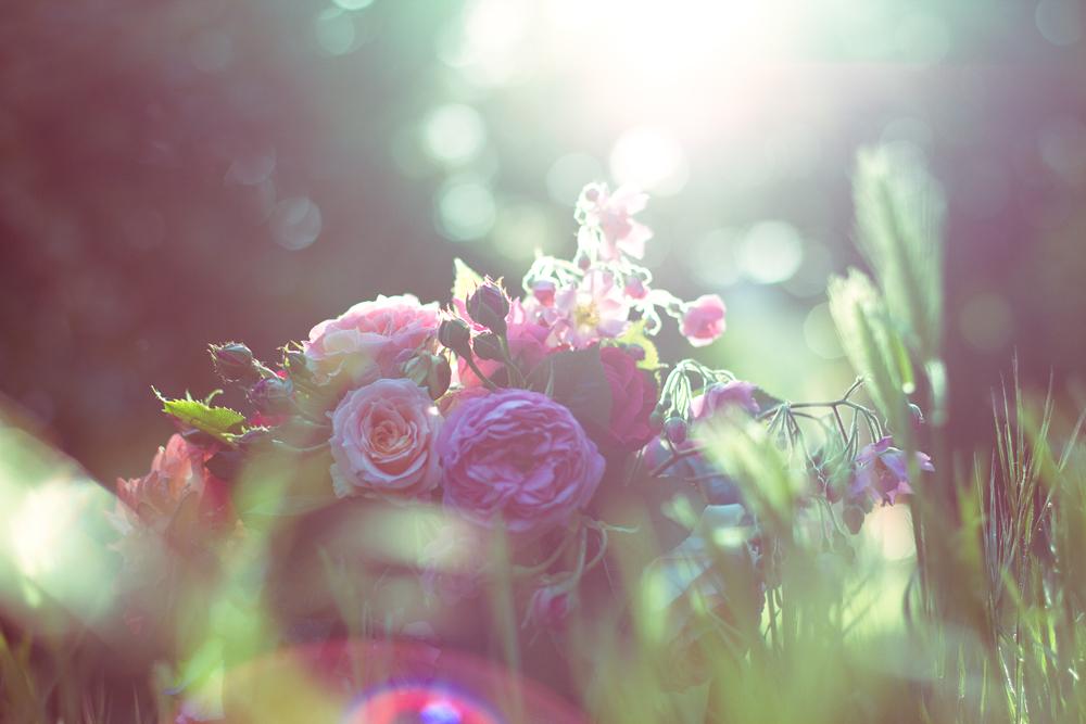 les-roses-de-lili-004