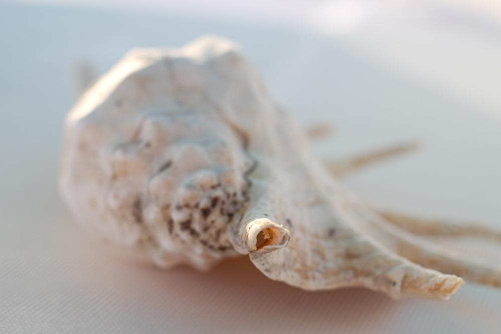 croisiere-maurice-dream-001