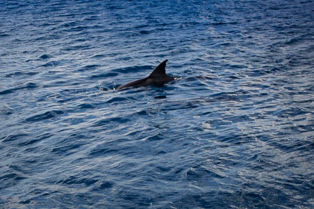 maurice-dauphins-001