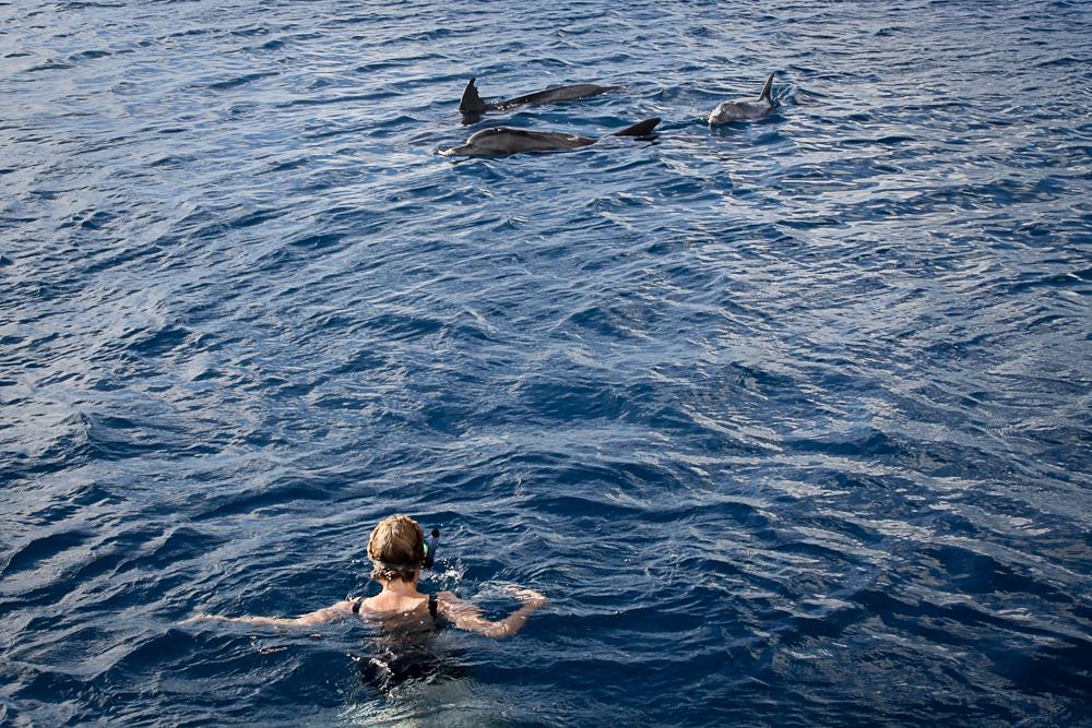 maurice-dauphins-002