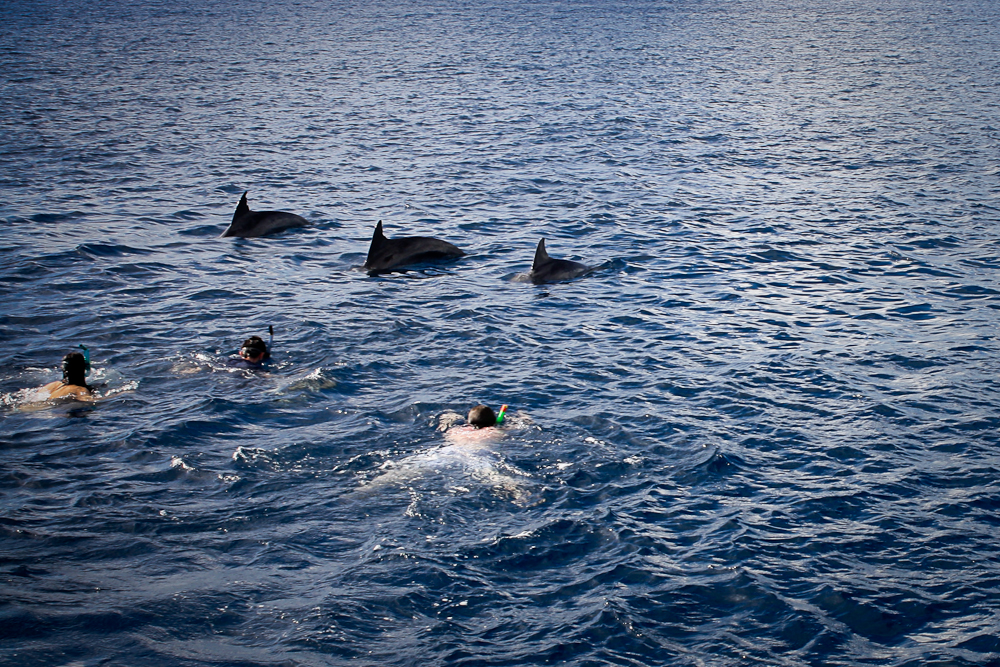 maurice-dauphins-003