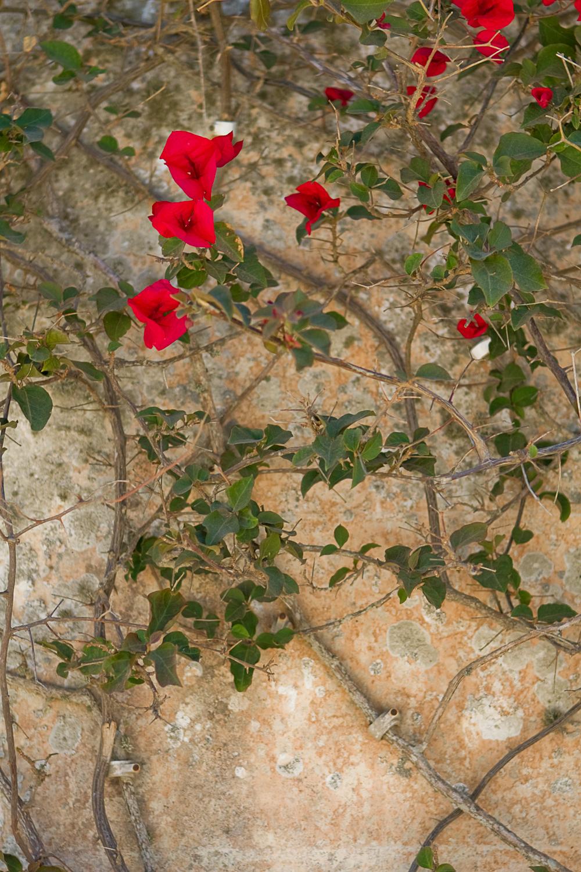 malte-mdina-002b