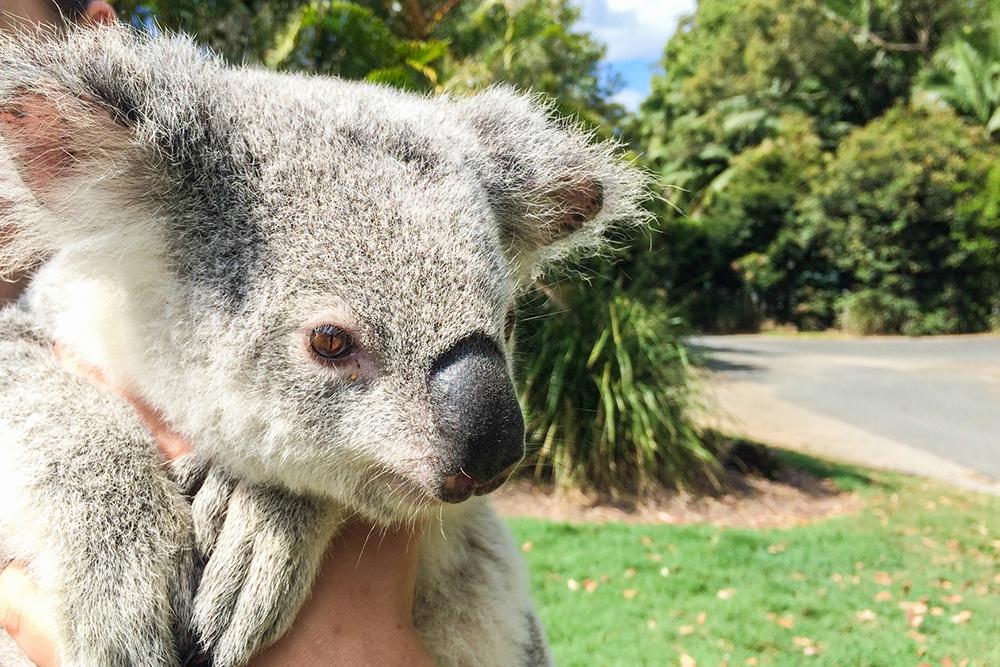 Australia-Zoo-002g