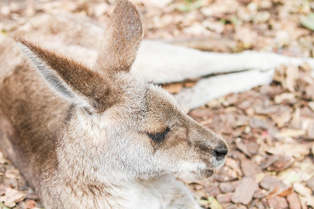 Australia-Zoo-003d