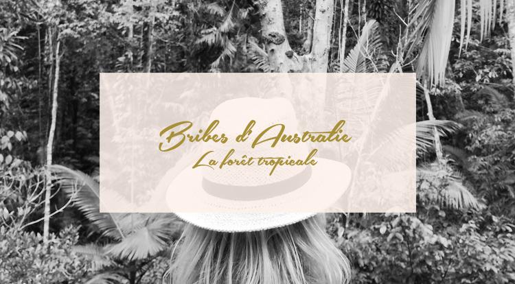 Bribes d'Australie – La forêt tropicale