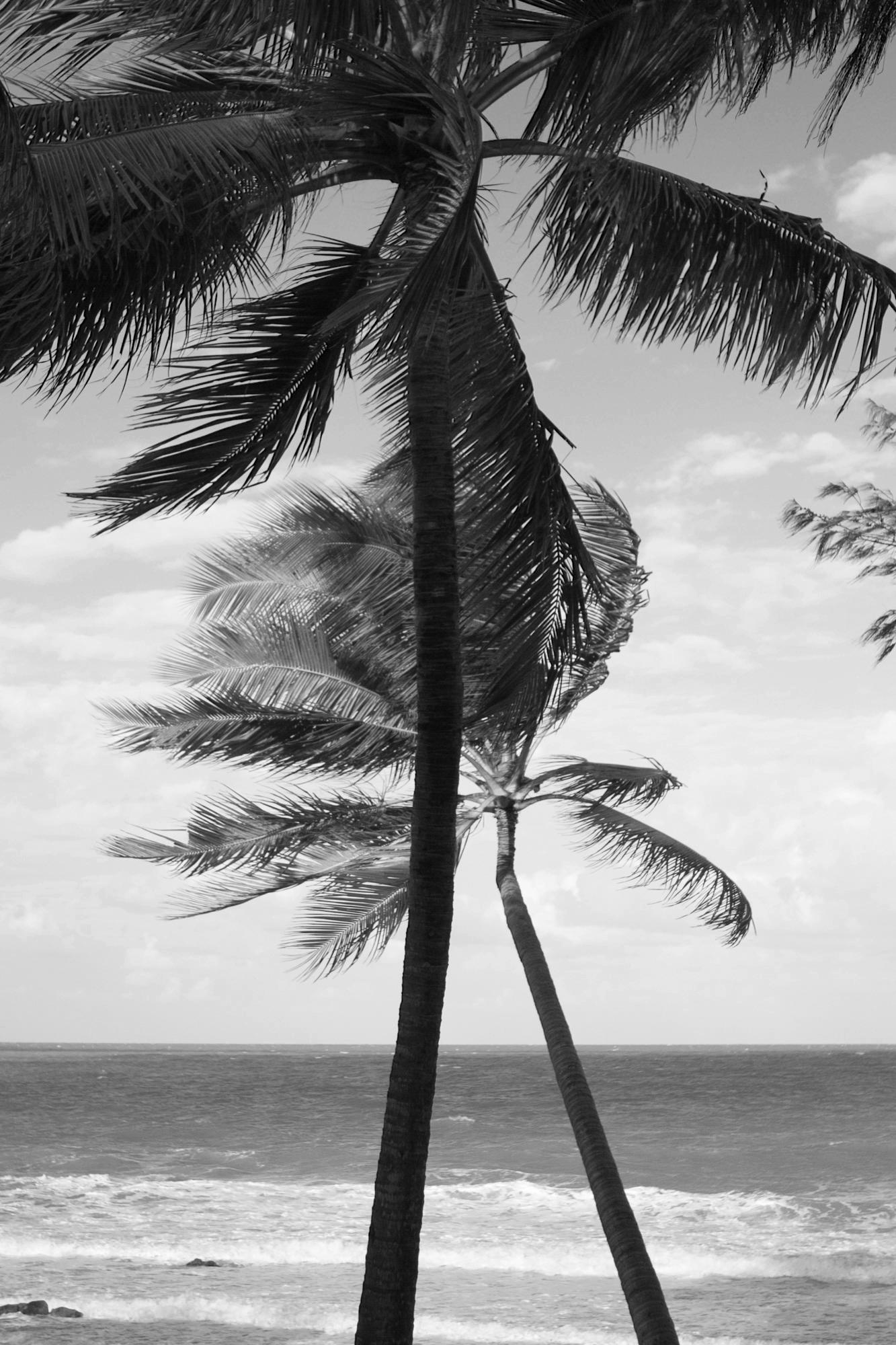 thala-beach-007g